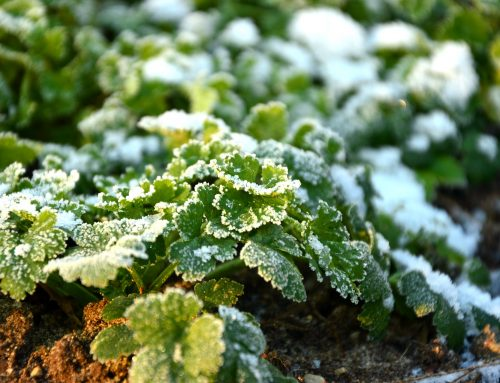 7 Winter Gardening Tips