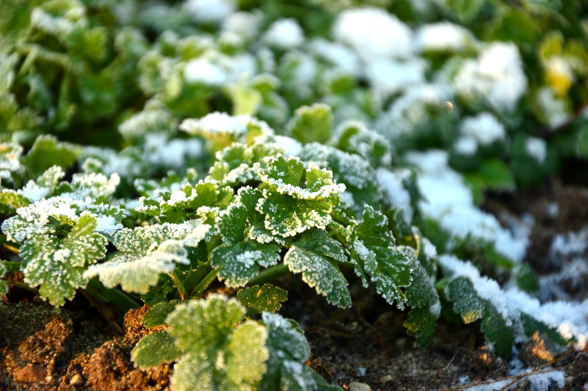 7 Winter Gardening Tips