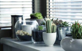 8 Gardening Tips For Beginners